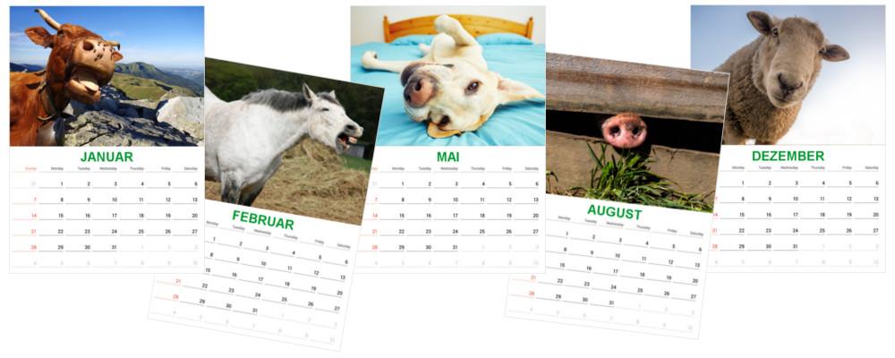 FAIE-Kalender_1000px